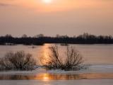 Narew rivier