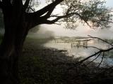 Oever Biebrza rivier