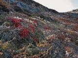 Toendra, Rype Fjord